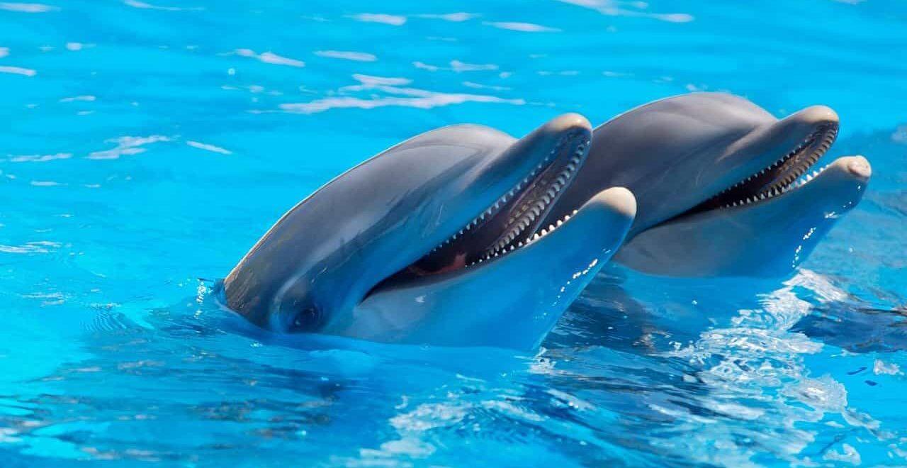 Дельфинарий, фото